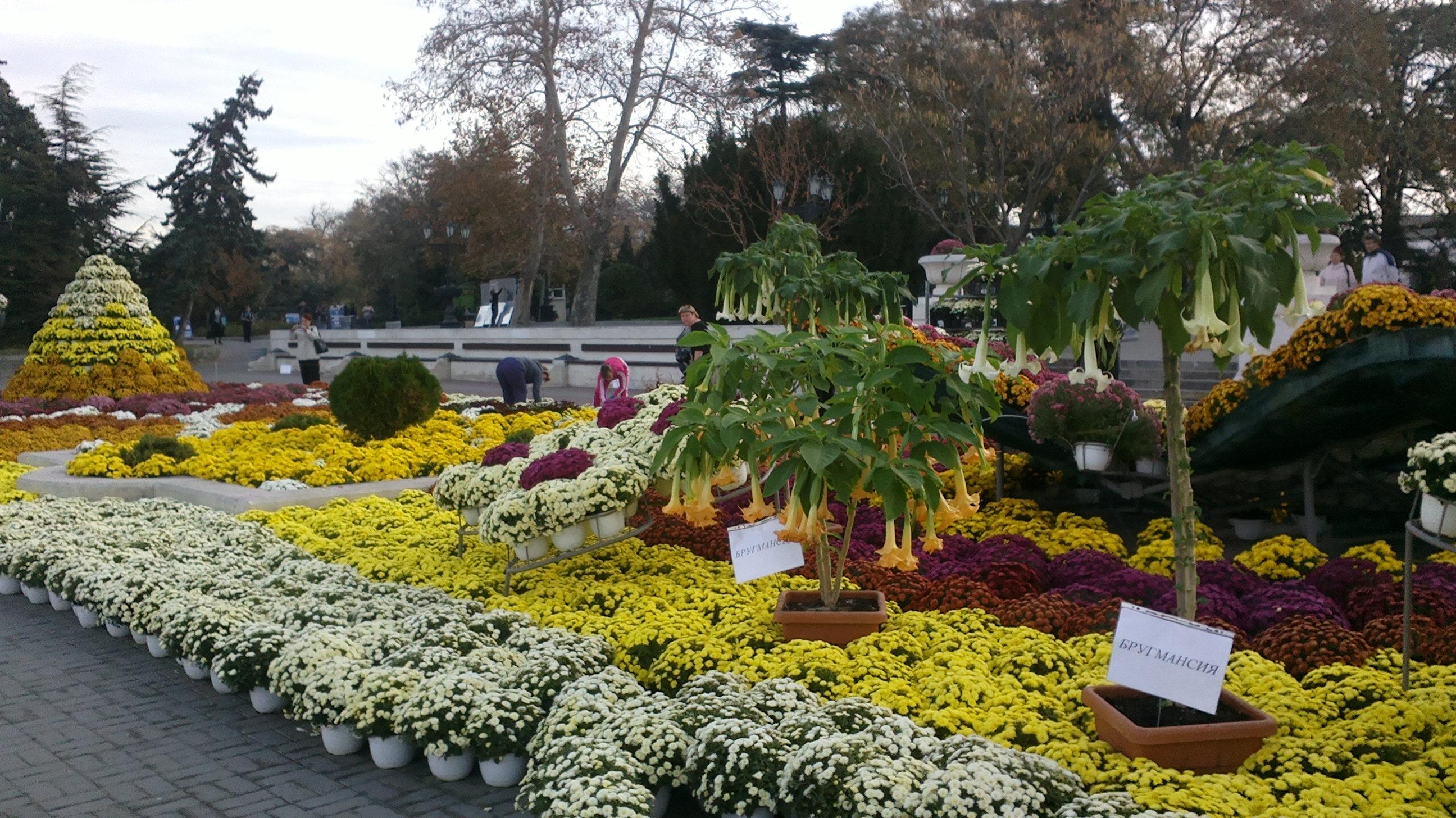 Где купить цветы в севастополе