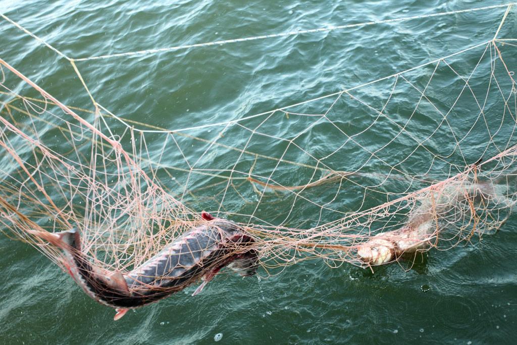 ловить рибу сетями