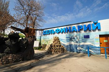 «Либо утопиться, либо застрелиться»: дельфинарий Севастополя хочет быть независимым