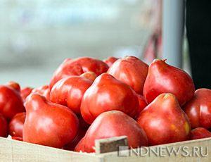 Крым намерен стать основным  поставщиком  помидоров в России