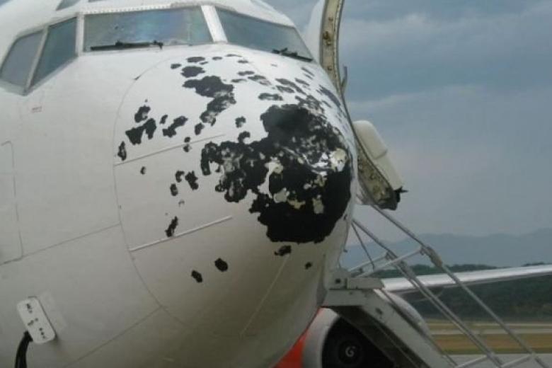 Стая птиц атаковала самолёт в аэропорту Симферополя